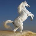 Зоотовары Киев.  Лошади